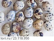 Купить «Перепелиные яйца на светлом деревянном фоне», фото № 23118950, снято 19 июня 2016 г. (c) Юлия Бочкарева / Фотобанк Лори