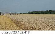 Купить «Уборка урожая зерновых культур», видеоролик № 23132418, снято 20 апреля 2016 г. (c) ActionStore / Фотобанк Лори