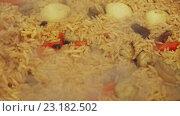 Купить «Приготовление плова с бараниной в казане на дровяной печи», видеоролик № 23182502, снято 19 мая 2016 г. (c) ActionStore / Фотобанк Лори