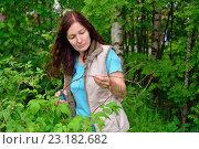 Купить «Девушка - садовод улыбается и отрезает секатором сухую прошлогоднюю ветку малины на дачном участке», фото № 23182682, снято 19 июня 2016 г. (c) Максим Мицун / Фотобанк Лори