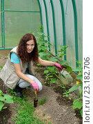 Купить «Девушка - садовод рыхлит лопаткой почву в теплице с огурцами на дачном участке», фото № 23182706, снято 19 июня 2016 г. (c) Максим Мицун / Фотобанк Лори