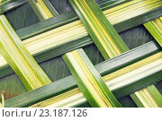 Купить «green palm tree leaf grid texture», фото № 23187126, снято 7 февраля 2015 г. (c) Syda Productions / Фотобанк Лори
