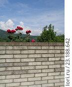 Купить «Красные розы и зеленые деревья за кирпичной стеной», фото № 23188642, снято 28 мая 2016 г. (c) DiS / Фотобанк Лори