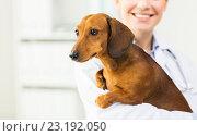 Купить «close up of vet with dachshund dog at clinic», фото № 23192050, снято 19 июля 2015 г. (c) Syda Productions / Фотобанк Лори