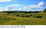 Зелёный луг, летний пейзаж. Стоковое фото, фотограф Андрей Силивончик / Фотобанк Лори