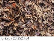 Опавшие листья фон. Стоковое фото, фотограф Алексей Костенко / Фотобанк Лори