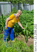 Купить «Пожилая женщина на огороде с подрастающей кукурузой», эксклюзивное фото № 23258202, снято 10 июля 2016 г. (c) Елена Коромыслова / Фотобанк Лори