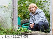 Купить «Довольная женщина садовод с урожаем огурцов на пороге парника на даче», фото № 23277058, снято 28 августа 2015 г. (c) Кекяляйнен Андрей / Фотобанк Лори