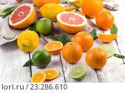 Купить «Fresh citrus fruits», фото № 23286610, снято 18 мая 2016 г. (c) Tatjana Baibakova / Фотобанк Лори