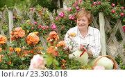 Купить «retiree woman gardening bush roses», видеоролик № 23303018, снято 16 июня 2016 г. (c) Яков Филимонов / Фотобанк Лори