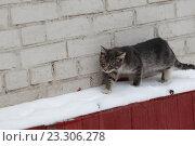 Купить «Котенок на улице зимой», эксклюзивное фото № 23306278, снято 17 января 2016 г. (c) Дмитрий Неумоин / Фотобанк Лори