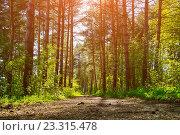 Купить «Летний сосновый лес», фото № 23315478, снято 5 мая 2016 г. (c) Зезелина Марина / Фотобанк Лори