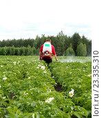 Обработка посевов картофеля химическими веществами против колорадского жука. Стоковое фото, фотограф Андрей Силивончик / Фотобанк Лори