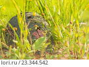 Солдатская каска в траве. Стоковое фото, фотограф Виктор Евстратов / Фотобанк Лори