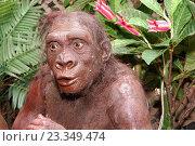 Handsome man. Неандерталец (2010 год). Редакционное фото, фотограф Сергей Кашин / Фотобанк Лори