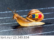 Купить «Snail under flag of Moldova on sports track», фото № 23349834, снято 23 июля 2016 г. (c) Сергей Лаврентьев / Фотобанк Лори