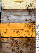 Купить «Пчелы в улье», фото № 23365142, снято 8 июля 2016 г. (c) Антон Гвоздиков / Фотобанк Лори