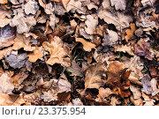 Опавшие осенние листья на земле, фон. Стоковое фото, фотограф Алексей Костенко / Фотобанк Лори