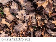 Опавшие листья на земле, фон. Стоковое фото, фотограф Алексей Костенко / Фотобанк Лори