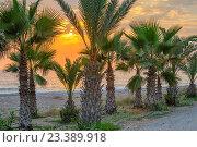 Купить «Пальмовая роща на берегу и закат над морем», фото № 23389918, снято 20 июня 2012 г. (c) Евгений Дробжев / Фотобанк Лори