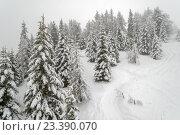 Купить «Зимний заснеженный лес с лыжными трассами», фото № 23390070, снято 20 января 2014 г. (c) Евгений Дробжев / Фотобанк Лори