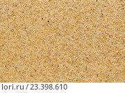 Купить «Желтые песчинки песка озера Байкал», фото № 23398610, снято 2 августа 2016 г. (c) Татьяна Егорова / Фотобанк Лори