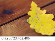 Купить «close up of yellow oak tree autumn leaf on wood», фото № 23402406, снято 19 октября 2015 г. (c) Syda Productions / Фотобанк Лори