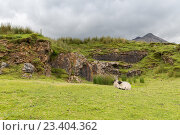 Купить «sheep grazing on hills of connemara in ireland», фото № 23404362, снято 23 июня 2016 г. (c) Syda Productions / Фотобанк Лори