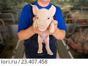 Купить «Маленький поросенок на свиноферме», фото № 23407458, снято 20 июля 2016 г. (c) Mark Agnor / Фотобанк Лори