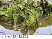 Купить «Тина над рекой», эксклюзивное фото № 23412862, снято 24 июля 2016 г. (c) Анатолий Матвейчук / Фотобанк Лори