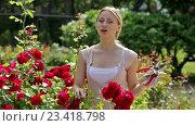 Купить «woman taking care of red rose», видеоролик № 23418798, снято 7 августа 2016 г. (c) Яков Филимонов / Фотобанк Лори