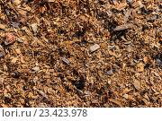 Фон из натуральных древесных опилок и мелкой деревянной стружки. Стоковое фото, фотограф Алексей Костенко / Фотобанк Лори