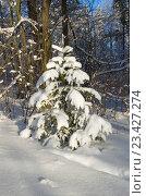 Купить «Молодая елочка в зимнем лесу», фото № 23427274, снято 24 января 2016 г. (c) Елена Коромыслова / Фотобанк Лори