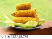 Купить «Вареная кукуруза на зелёных листьях в тарелке», фото № 23429778, снято 14 августа 2016 г. (c) Кохан Пётр / Фотобанк Лори
