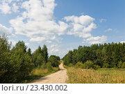 Грунтовая дорога вдоль леса. Сельский пейзаж. Стоковое фото, фотограф Макаров Алексей / Фотобанк Лори