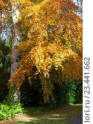 Купить «Дорожка в осеннем лесу», фото № 23441662, снято 22 октября 2015 г. (c) Татьяна Кахилл / Фотобанк Лори