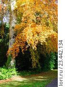 Купить «Осеннее дерево», фото № 23442134, снято 22 октября 2015 г. (c) Татьяна Кахилл / Фотобанк Лори