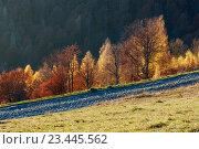 Купить «Rural road and golden autumn in mountain.», фото № 23445562, снято 4 ноября 2015 г. (c) Юрий Брыкайло / Фотобанк Лори