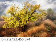 Купить «Осень. Дерево. Клен. Золотая Осень», фото № 23455574, снято 17 февраля 2019 г. (c) Дмитрий Третьяков / Фотобанк Лори