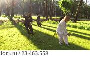 Купить «Группа из четырёх человек, практикующих цигун в парке», видеоролик № 23463558, снято 23 августа 2016 г. (c) ActionStore / Фотобанк Лори