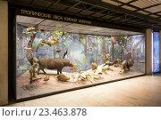 Купить «Экспонаты Дарвиновского музея в Москве», эксклюзивное фото № 23463878, снято 21 января 2015 г. (c) Сергей Лаврентьев / Фотобанк Лори