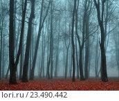 Купить «Осенний мистический пейзаж - туманный безлюдный парк с  опавшими красными листьями в густом тумане», фото № 23490442, снято 6 ноября 2015 г. (c) Зезелина Марина / Фотобанк Лори