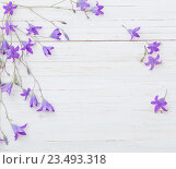 Купить «bluebell flowers om white wooden background», фото № 23493318, снято 12 июня 2016 г. (c) Майя Крученкова / Фотобанк Лори