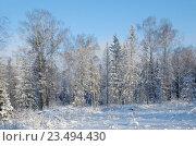 Купить «Зимний лес», эксклюзивное фото № 23494430, снято 24 января 2016 г. (c) Елена Коромыслова / Фотобанк Лори