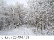 Купить «Зимний пейзаж с лесом», эксклюзивное фото № 23494438, снято 24 января 2016 г. (c) Елена Коромыслова / Фотобанк Лори