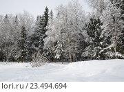 Купить «Зимний пейзаж с лесом», эксклюзивное фото № 23494694, снято 2 марта 2013 г. (c) Елена Коромыслова / Фотобанк Лори