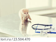 Купить «close up of scottish fold kitten at vet clinic», фото № 23504470, снято 19 июля 2015 г. (c) Syda Productions / Фотобанк Лори