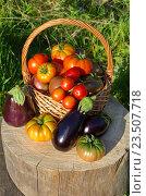 Купить «Урожай овощей на дачном участке», эксклюзивное фото № 23507718, снято 28 августа 2016 г. (c) Елена Коромыслова / Фотобанк Лори