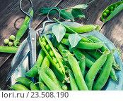 Стручки зеленого горошка и ножницы на тарелке. Стоковое фото, фотограф Андрей Маслаков / Фотобанк Лори