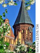 Купить «Башня Кафедрального собора Кёнигсберга и цветущий чубушник. Символ города Калининград (до 1946 кода Кёнигсберг), Россия», фото № 23516134, снято 18 июня 2016 г. (c) Сергей Трофименко / Фотобанк Лори